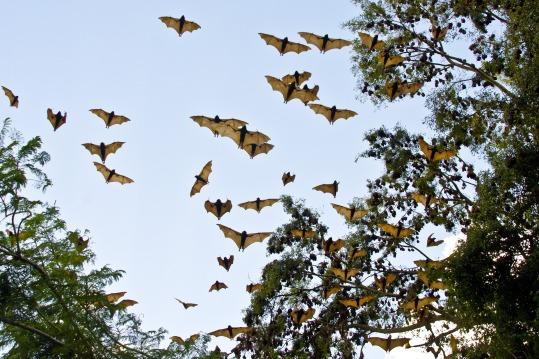 bats-3495777_1920