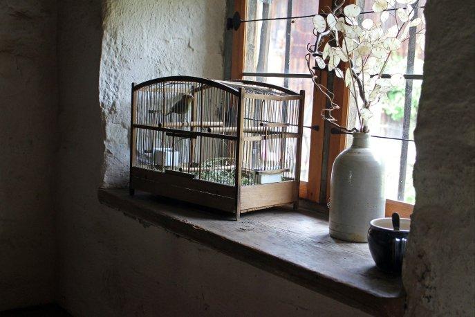bird-cage-402205_1920